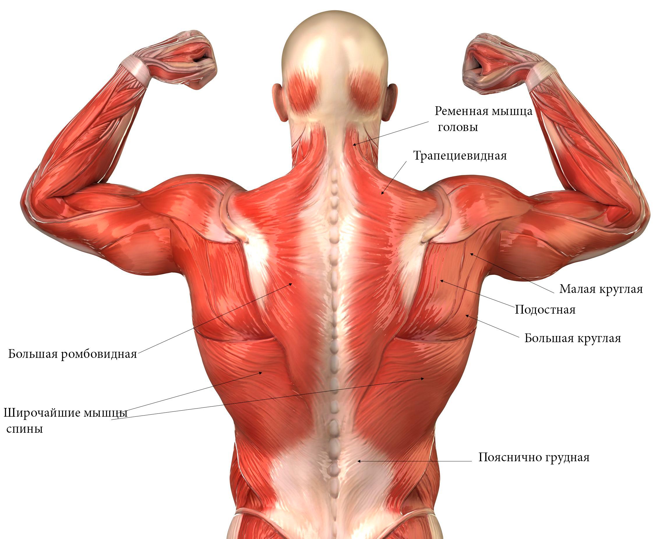 anatomiya-zhenskih-organov-v-kartinkah-mishtsi-rizhaya-telka-v-chernom-kombidrese-liho-skachet-na-chlene